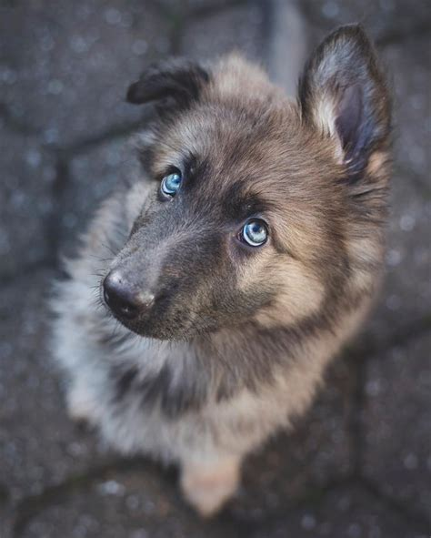 list cutest dog breeds   world  picture