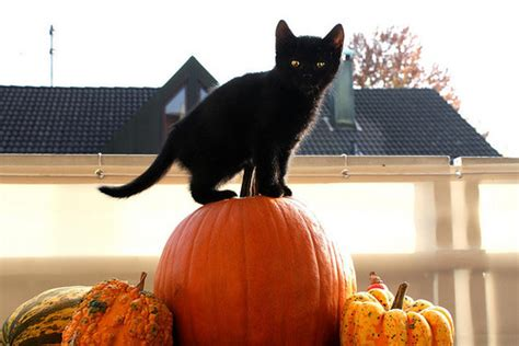 cat and pumpkin reasons to smile