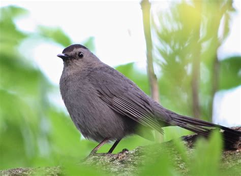 message from chris leahy about the mass audubon bird a
