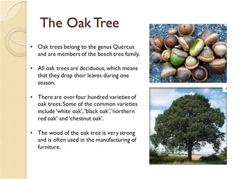 what does wood symbolize oak tree symbolism in the bible beatiful tree