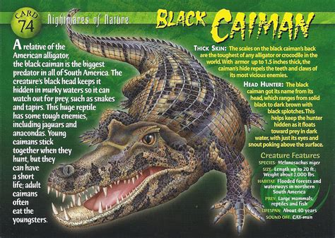 black caiman wierd nwild creatures wiki fandom powered  wikia