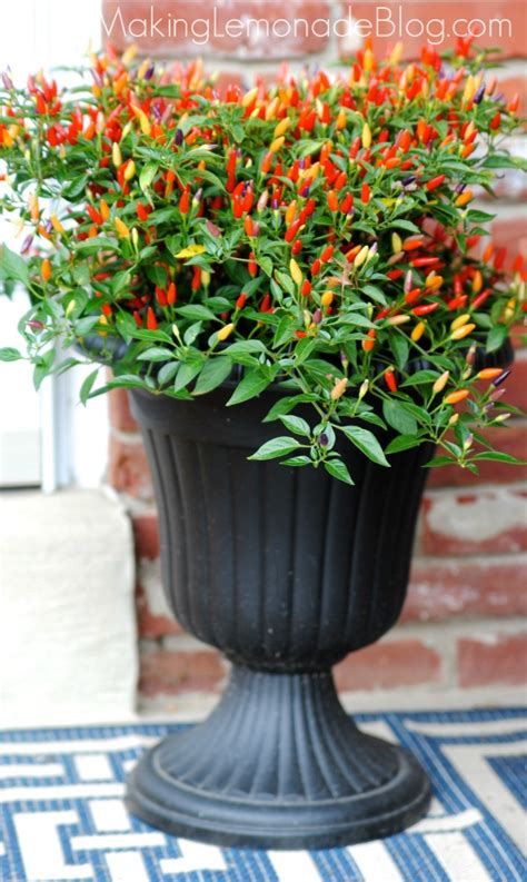 Urn Planters Cheap by Front Porch Outdoor Decor For Fall Hello Chili Peppers