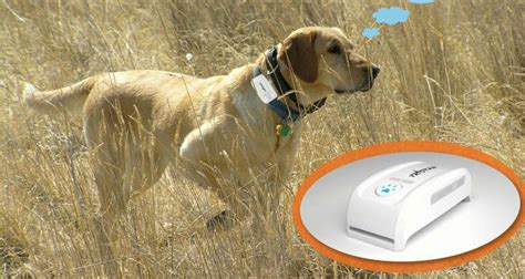 gps chip for dogs gps chip for web tracking and moboile phone app track gps pet tracker free collar jpg