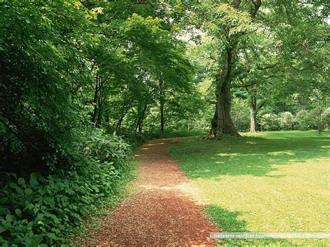 pathway pictures garden pathway pictures forest path wallpapers 2