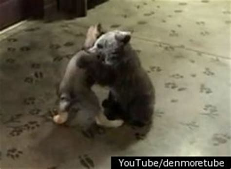 baby bear and wolf play together at woodland zoo gift shop