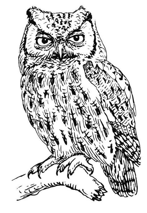 10 difficult owl coloring page for adults coloring pages for adults difficult animals google