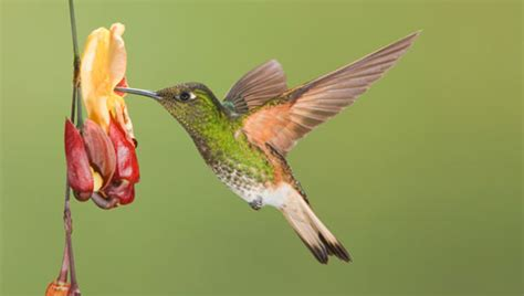 amazing facts about hummingbirds onekind