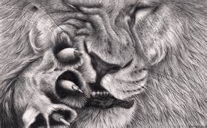 Detailed lion drawings in pencil lion itch by bengtern