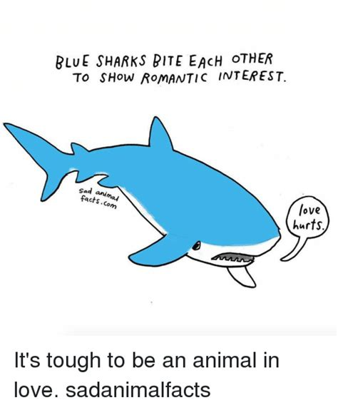 Sad Shark Meme - 25 best memes about sad animal sad animal memes
