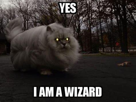 wizard cat 13 best cats who are also wizards images on