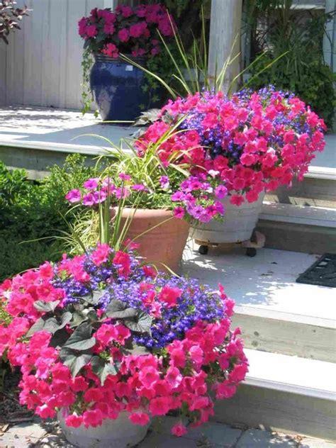 petunia container garden ideas flower gardening