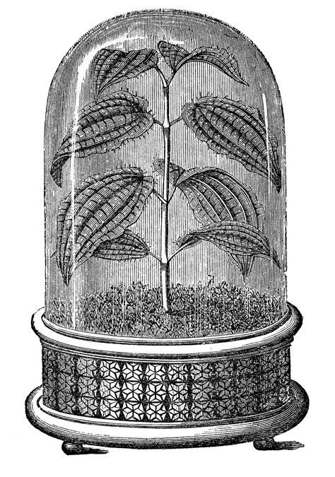 vintage images amazing cloche  plant  graphics