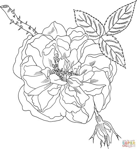 rose coloring page for adults coloring pages free adult roses coloring pages rose