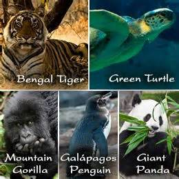 endangered animals of the world with their names