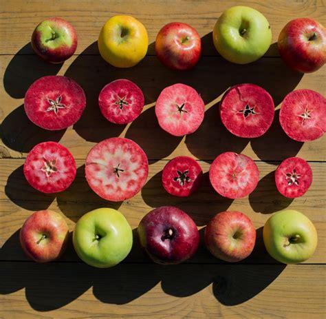 Die Besten Apfelsorten 3525 die besten apfelsorten apfelkuchen backen die besten