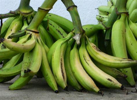 tentang produk kerepek pisang ina murni enterprise