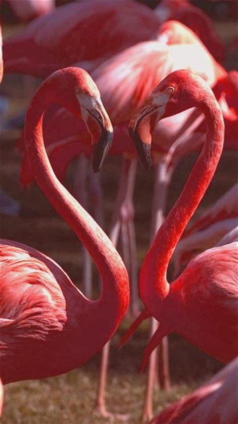 flamingo mobile wallpaper belle kitsch and love couple on pinterest