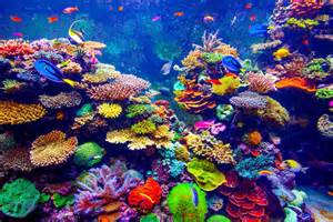 saltwater fish are those that prefer to live in a saltwater habitat