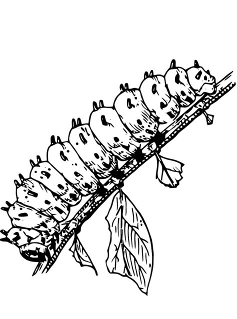 caterpillar coloring pages printable caterpillar coloring pages coloring me