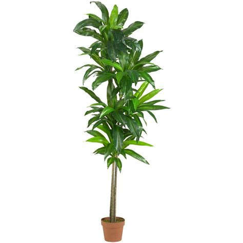 nearly real touch 6 ft dracaena silk plant 6596