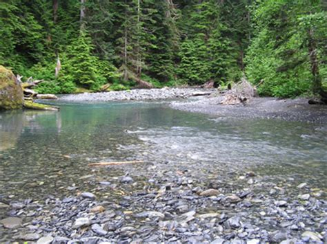 lake quinault boating regulations north fork quinault river trail olympic national park u
