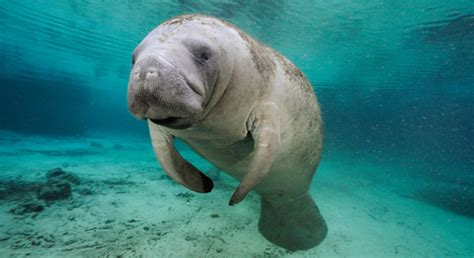 tattoo matamoras pa related keywords suggestions for manatee