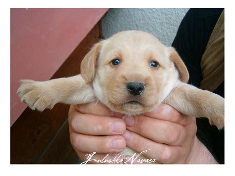 baby dogs baby 3 by julushko navara on deviantart