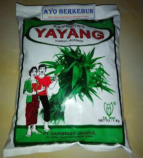 berkebun kangkung i cara menanam kangkung dari biji ayo berkebun