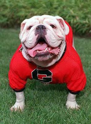 collegiate canines – 10 university mascots   dog reflections