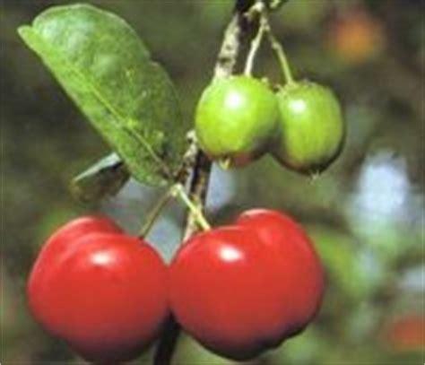 alimento rico en vitamina c alimentos ricos en vitamina c alimentos con vitamina c