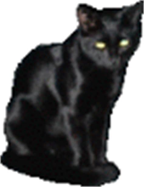 tutorial gambar gif rahmian4 gambar gif dari jenis hewan kucing kucing lucu