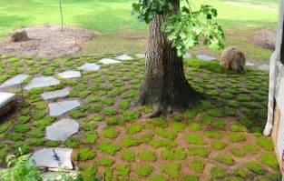 how to grow moss moss and stone gardens