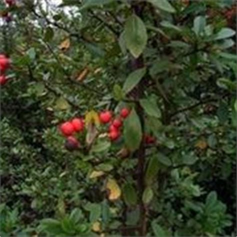 fiori velenosi per l uomo puntura con agave filiforme domande e risposte piante grasse