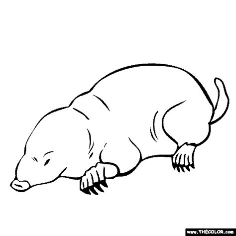 mole black and white clipart