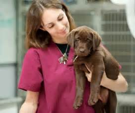 Responsibilities For A Veterinarian by What Do Veterinary Technicians Do