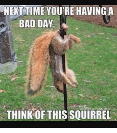 Bad Day Meme - next time you re having a bad day think of this squirrel
