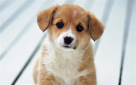 puppies live wallpaper puppy live wallpaper android apps on play