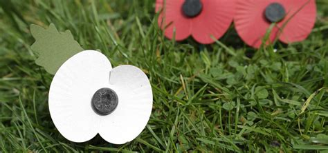 white poppy distribution of white poppies in schools causes