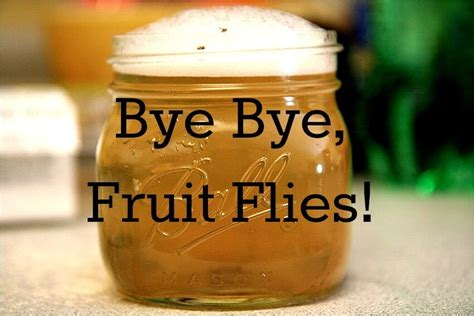 how to get rid of fruit flies in bathroom how to get rid of fruit flies fast and easy
