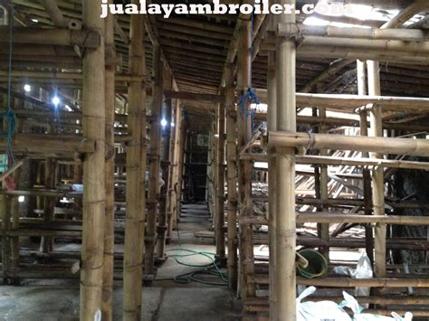 Jual Bibit Ayam Broiler Di Bogor jual ayam broiler di cariu bogorjual ayam broiler jual