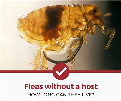 how long can bed bugs live without eating how do fleas stay alive genetic tatoa ru