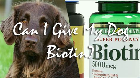 biotin for dogs can i give my biotin pet consider