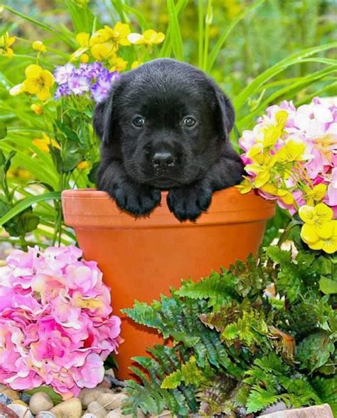 puppies and flowers puppy likes the flower pot so