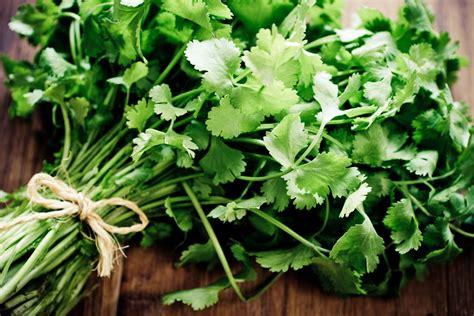 cilantro substitutes