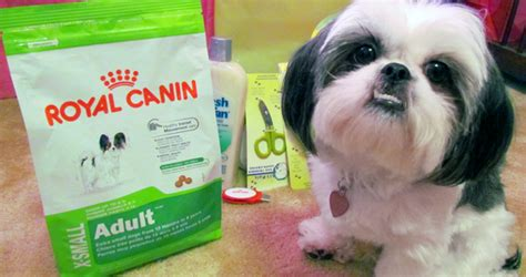 royal canin shih tzu my giveaway enter to win a quot day spa quot gift pack gracie lu shih tzu