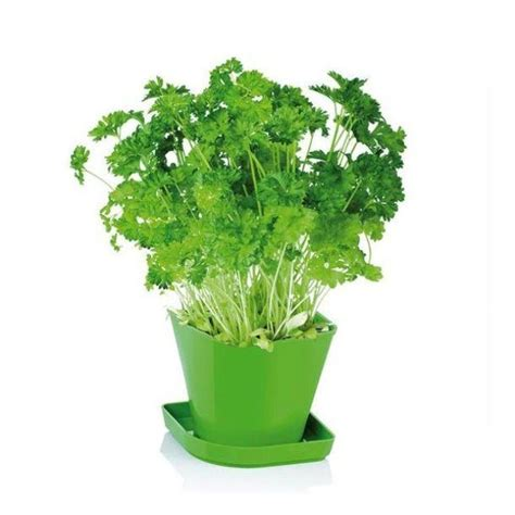 aromatiche in vaso erbe aromatiche