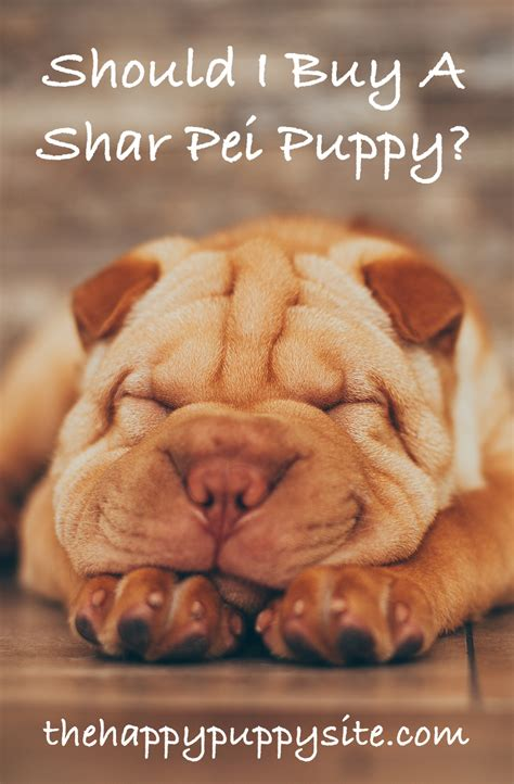 shar pei puppy price a complete guide to the shar pei breed
