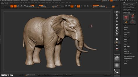 zbrush elephant tutorial sculpting an elephant in zbrush tutorial