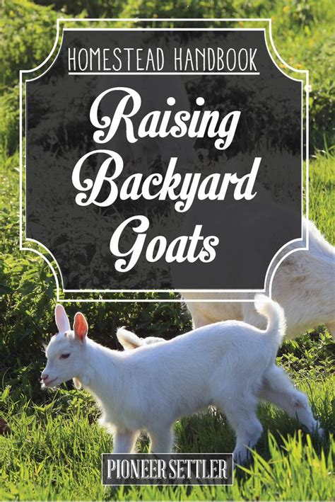theme names for goats 1356 best totes my goats images on pinterest farm