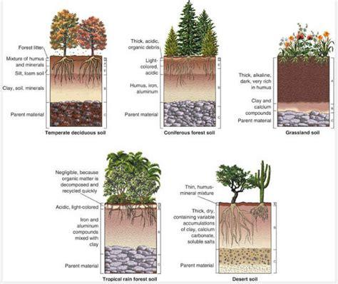 diagram of a soil profile soil layers it all